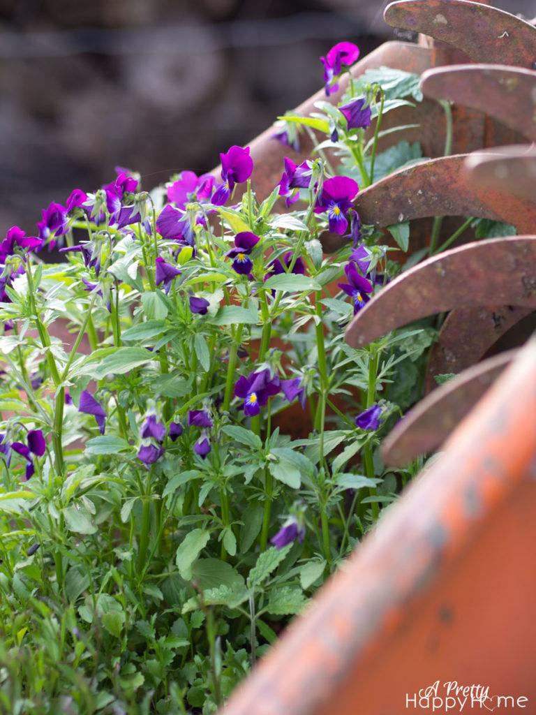 manure-spreader-planter-1
