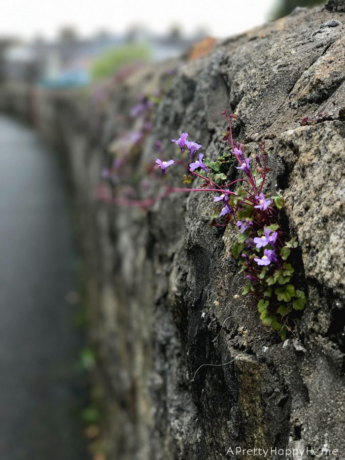 flowers in a wall