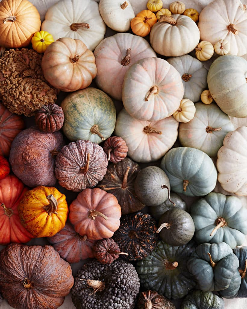 pumpkin varieties via martha stewart on the happy list